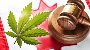 2019 National Cannabis Survey